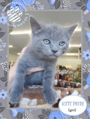 Kitty Pryde ADOPTION PENDING