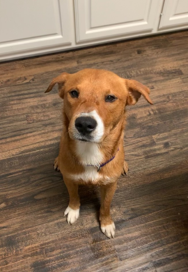 Griffey - Fostered in Southlake, TX 2