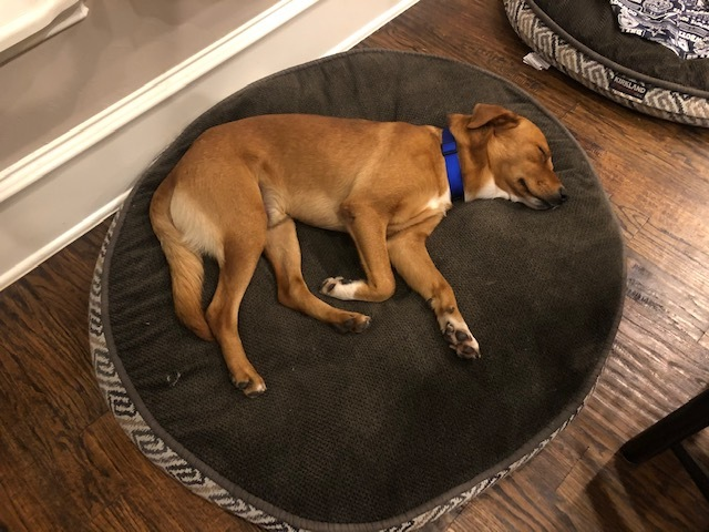 Griffey - Fostered in Southlake, TX 3