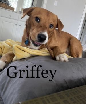 Griffey - Fostered in Southlake, TX