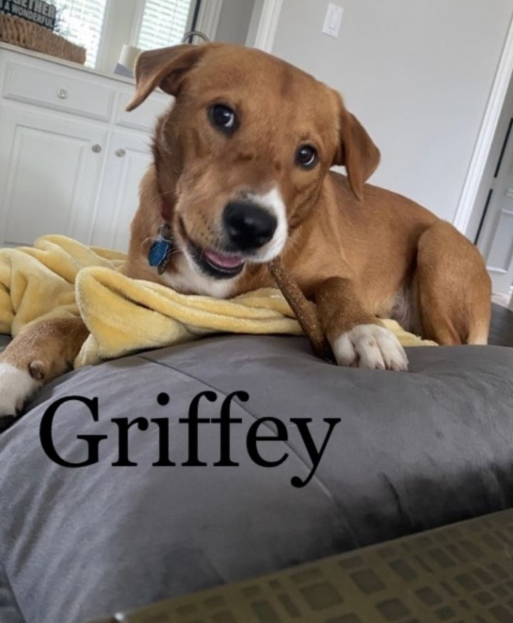 Griffey - Fostered in Southlake, TX 1