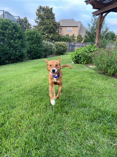 Griffey - Fostered in Southlake, TX 5