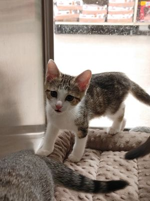 Sweet and playful loving girl in need of loving home
