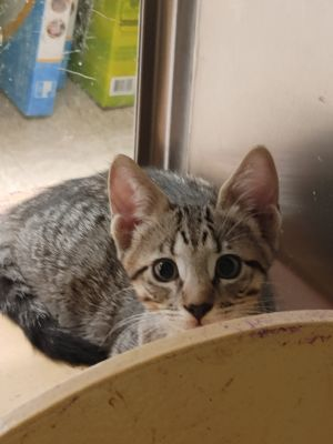 Sweet and playful loving boy in need of loving home