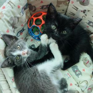 Biscuit and Hissy Fit may not be related but it was love at first sight and sniff These adorable