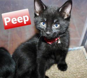 Photo of Peep