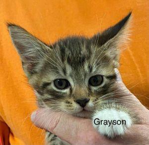 Photo of Grayson