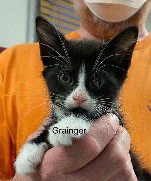 Photo of Grainger