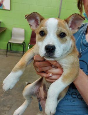 Valerie available ~ 6/19 Terrier Dog