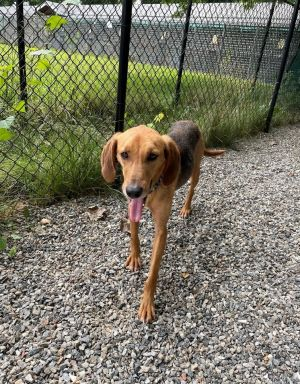 Travis available ~ 6/17 Hound Dog