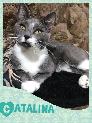 Need a sweet friendly and adorable lap-cat in your life Then look no further