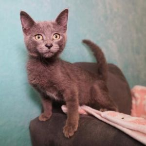 Hey Im Leia Im the sweetest cat ever I love to be pet and will purr like crazy to let