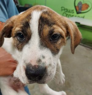 Birthdate 41521 Breed One of a kind Weight Before you can adopt please complete an adoption ap