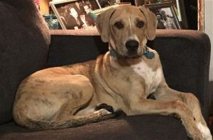 You can fill out an adoption application online on our official website Saul N