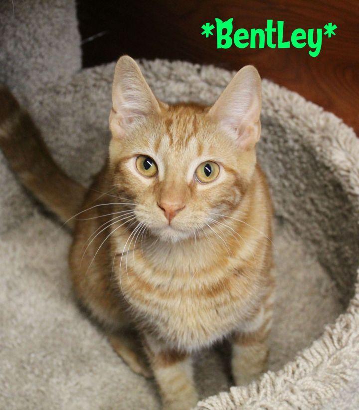 Bentley 5