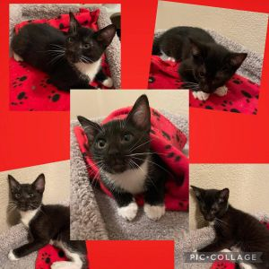 Say hello to Michael Michael is a sweet boy that wants to be held and loves to sleep in your