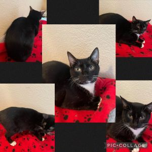 Meet Momma Whiskers Momma is a sweet girl She was a great mom to her babies and now its her