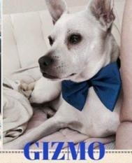 Gizmo is 8 and 24 lbs of total cuteness Hes best for a more quiet home without kids where he