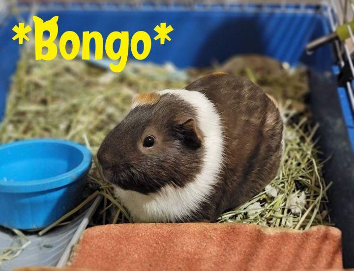Bongo 1