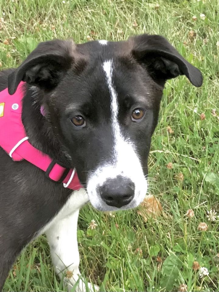 Hermione - adopted! 2