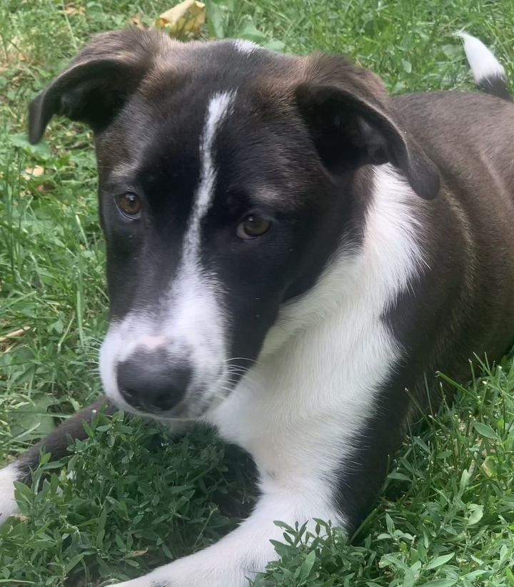 Hermione - adopted! 1