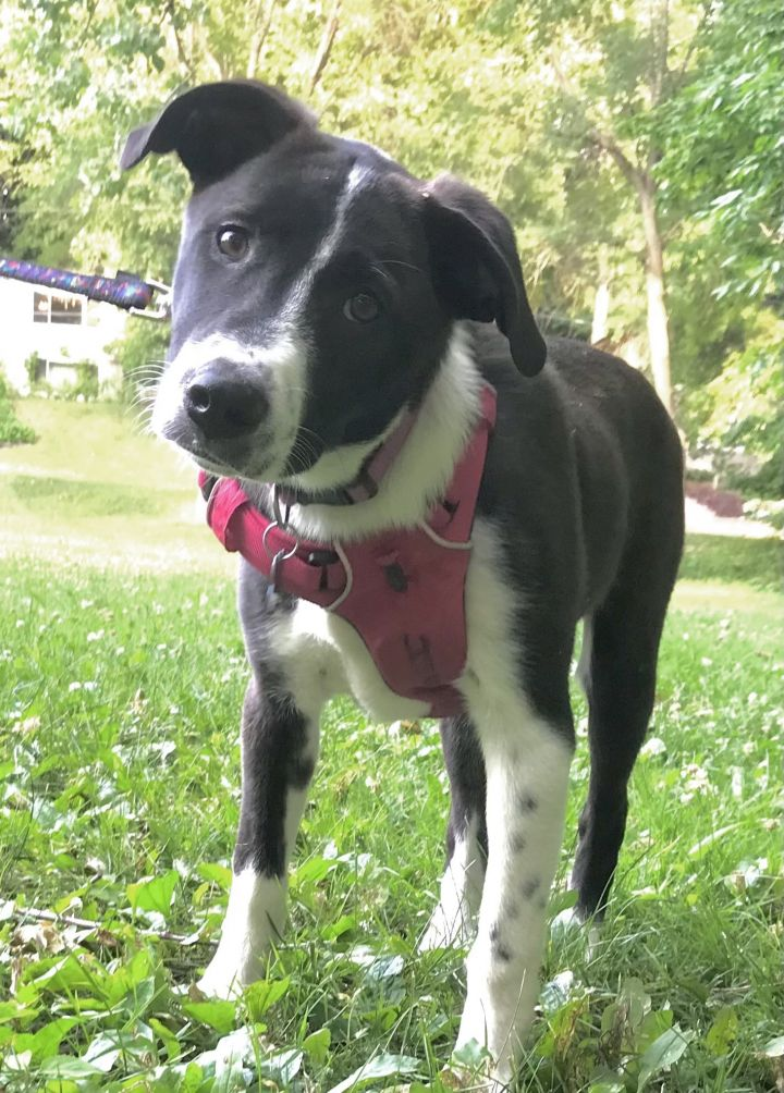 Hermione - adopted! 5