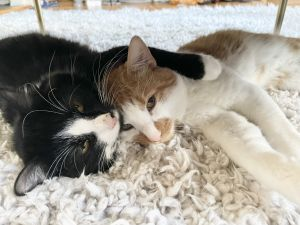 Meet Larry  Randall two young adorable brothers who love being together Whether they are playing
