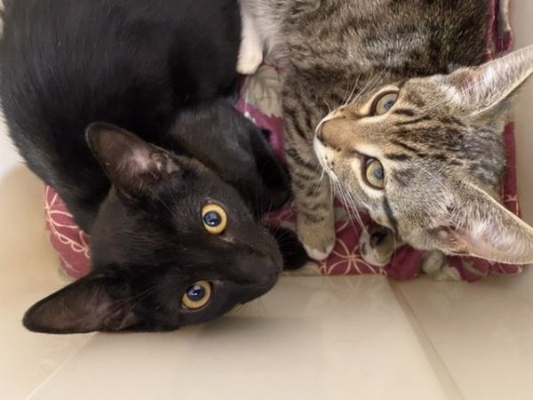 Snickers and Onyx