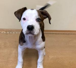 Photo of Puppy Bosley