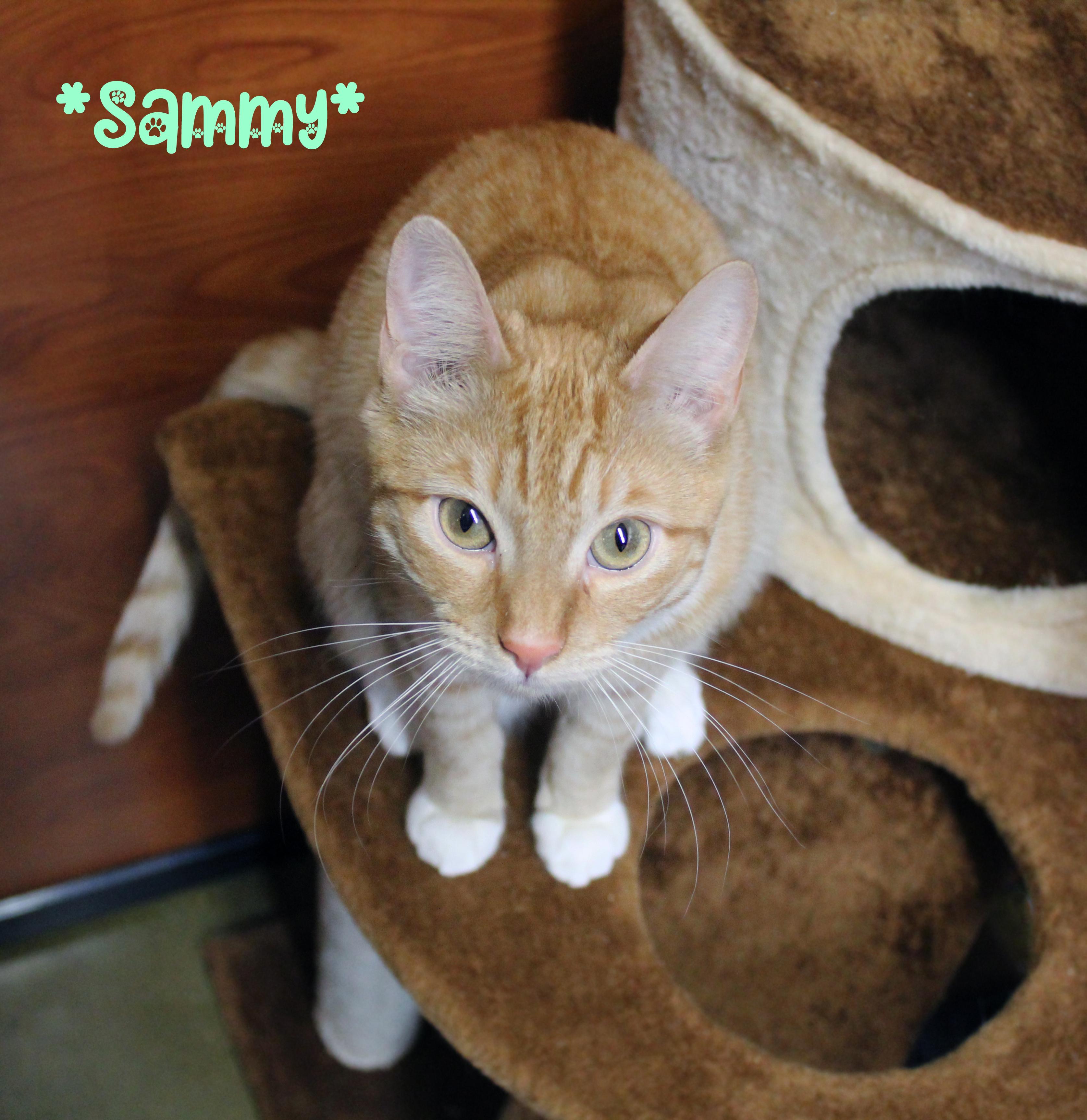 Sammy detail page