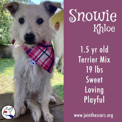 Snowie Khloe 2