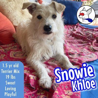 Snowie Khloe 1