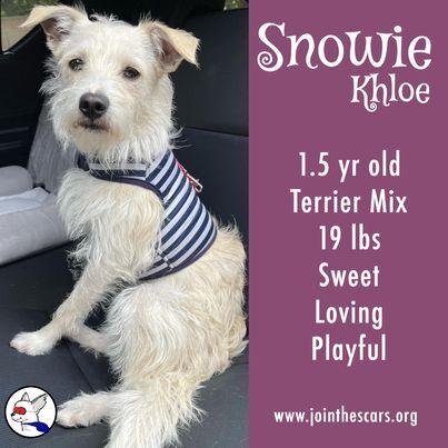 Snowie Khloe 3
