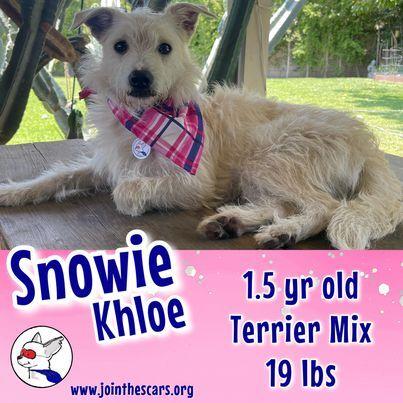Snowie Khloe 4