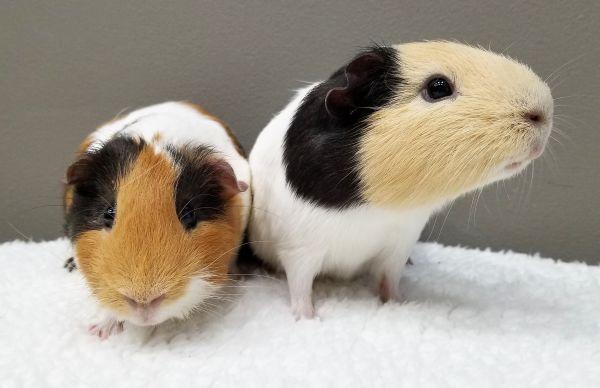 Theo & Blondie