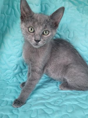 Meet Dakota She is one of a litter of three They were born 482021 They are all very sweet and