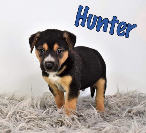 Hunter D5435 2