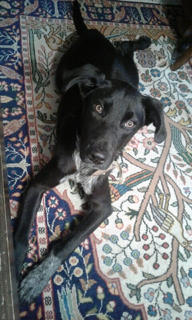 Nora - Fostered in Hartland VT 1