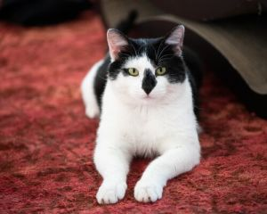 Hi Im Moo and I am sooooo happy to be inside with humans I was born on the streets in