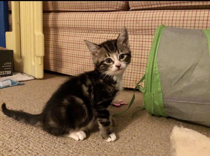 Abby (magic kittens) 1