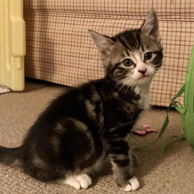 Abby (magic kittens)
