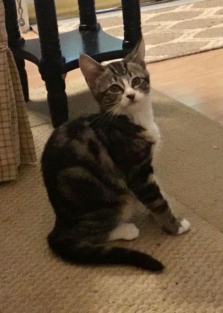 Abby (magic kittens) 3