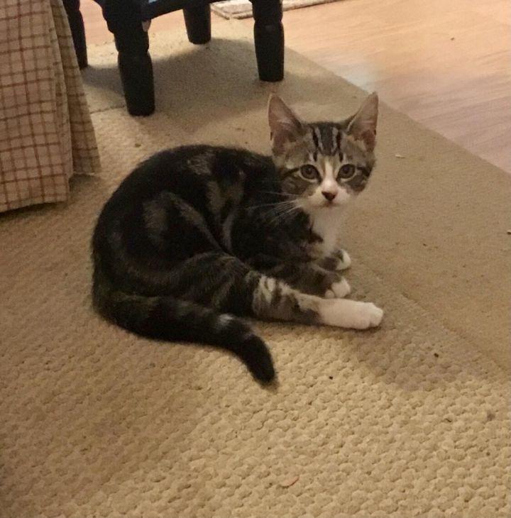 Abby (magic kittens) 4