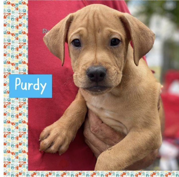 Purdy 1