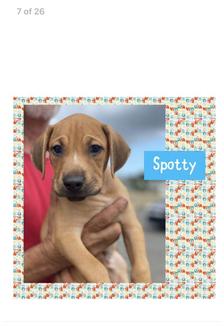 Spotty 1