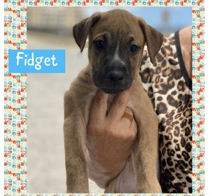 Fidget 1