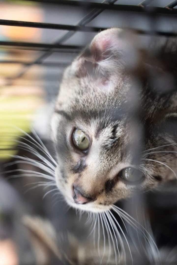 FL Kitties 11! 2