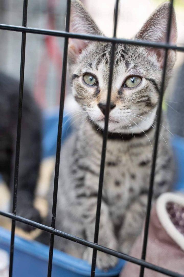 FL Kitties 11! 1