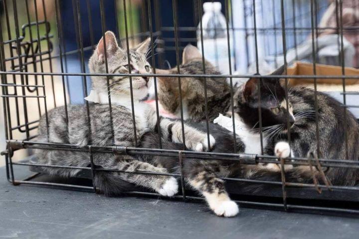 FL Kitties 11! 4