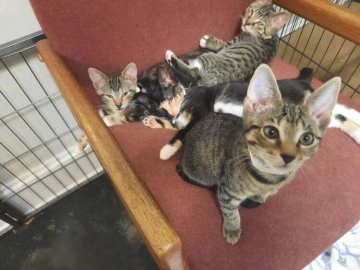 FL Kitties 11! 5